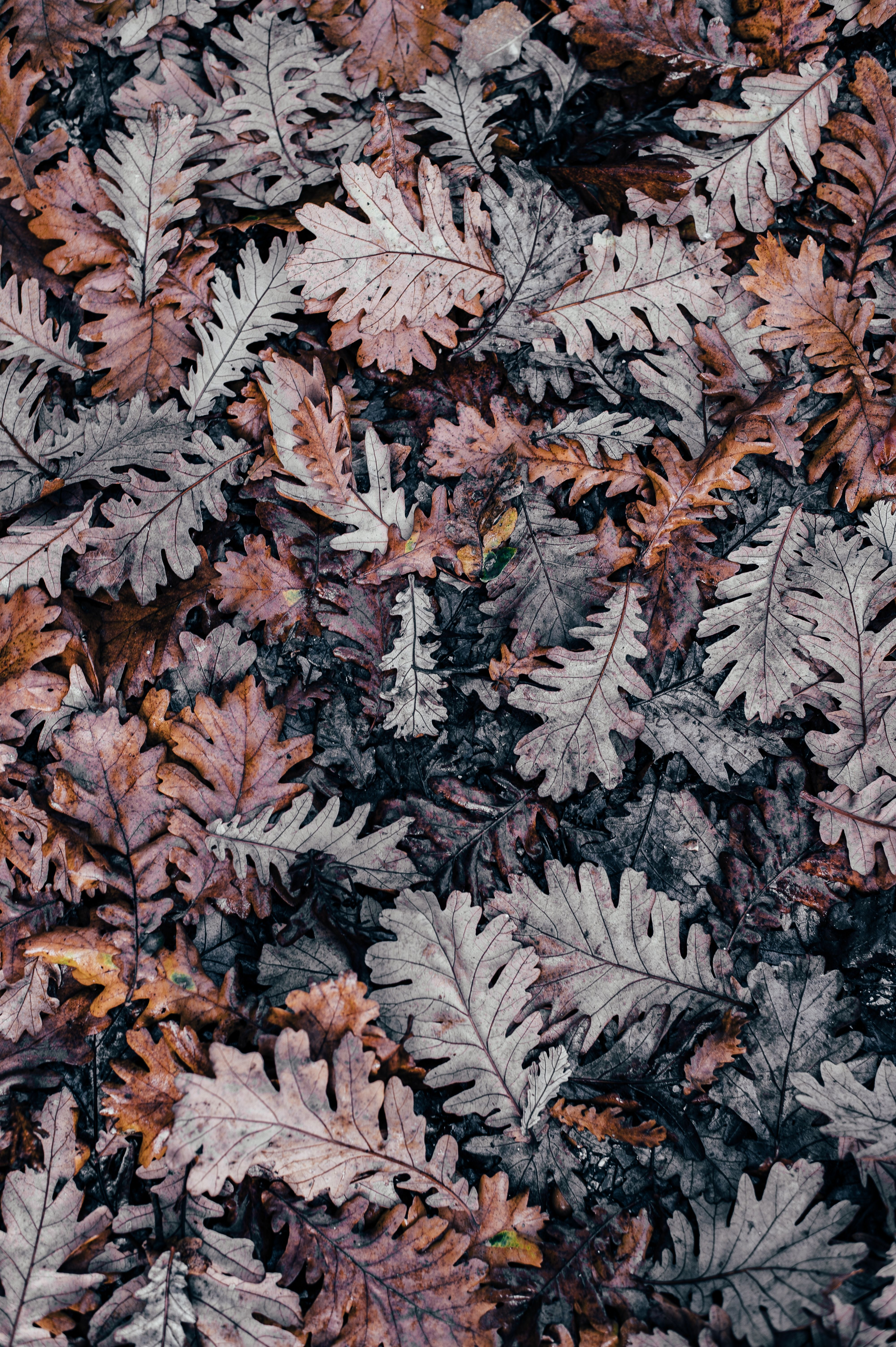 10 Amazing Free Minimalist Wallpaper Downloads For Iphone X Fall Wallpaper Preppy Wallpaper Oak Leaf Art