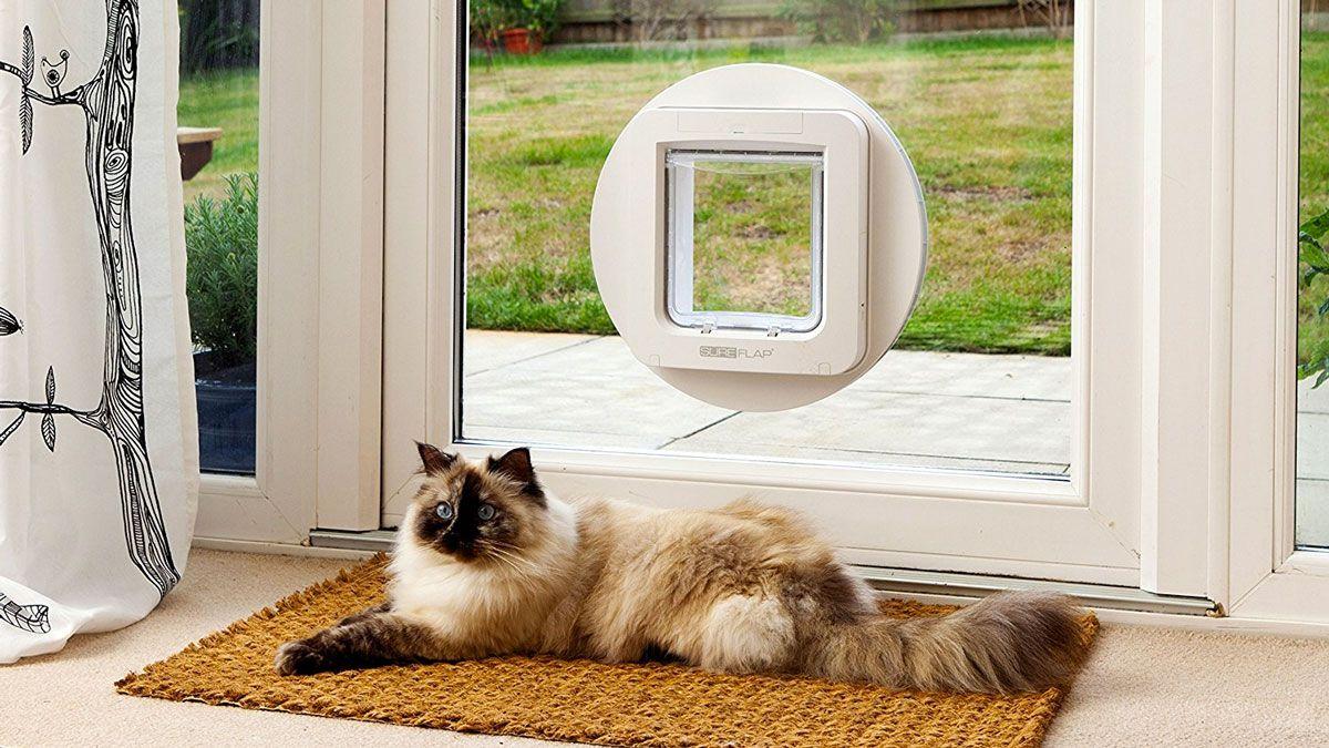 SureFlap Microchip Pet Door (With images) Cat door, Dog