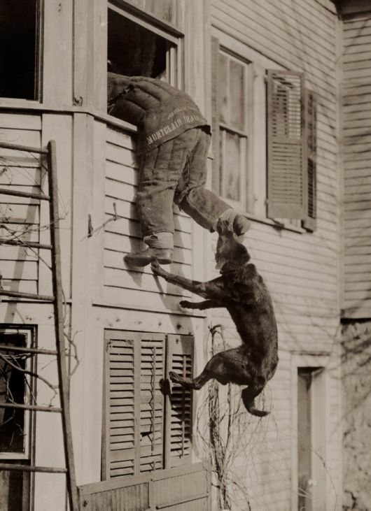 | 25 Unpublished Photos From National Geographic's Archives | A police dog biting some ankles during a training exercise, 1919.