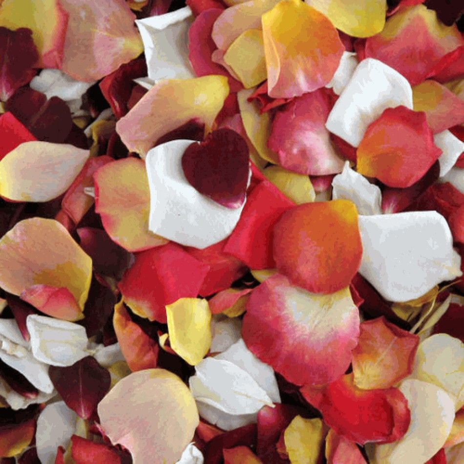 Sunset Freeze Dried Rose Petal Blend - 60 cups [RPSunset Rose Petal Blend Buy] : Wholesale Wedding Supplies, Discount Wedding Favors, Party Favors, and Bulk Event Supplies