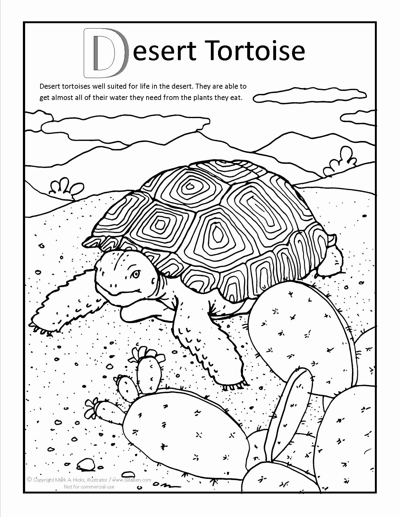 Coloring Pages For Kids Of Desert Animal In