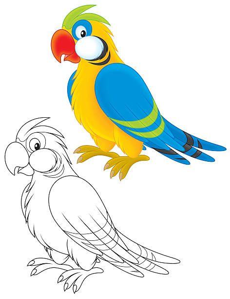 Попугай векторная иллюстрация | Векторные иллюстрации ...