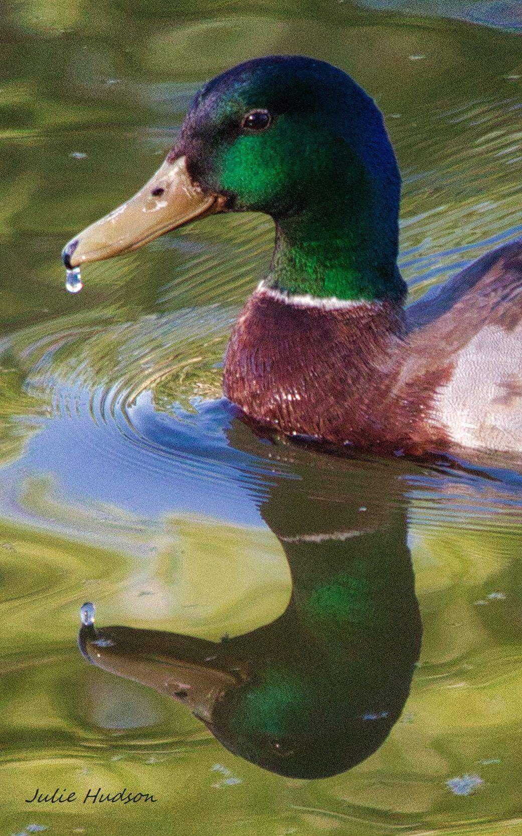Pin By Batqueen66 On Animals Reptiles Mammals Birds