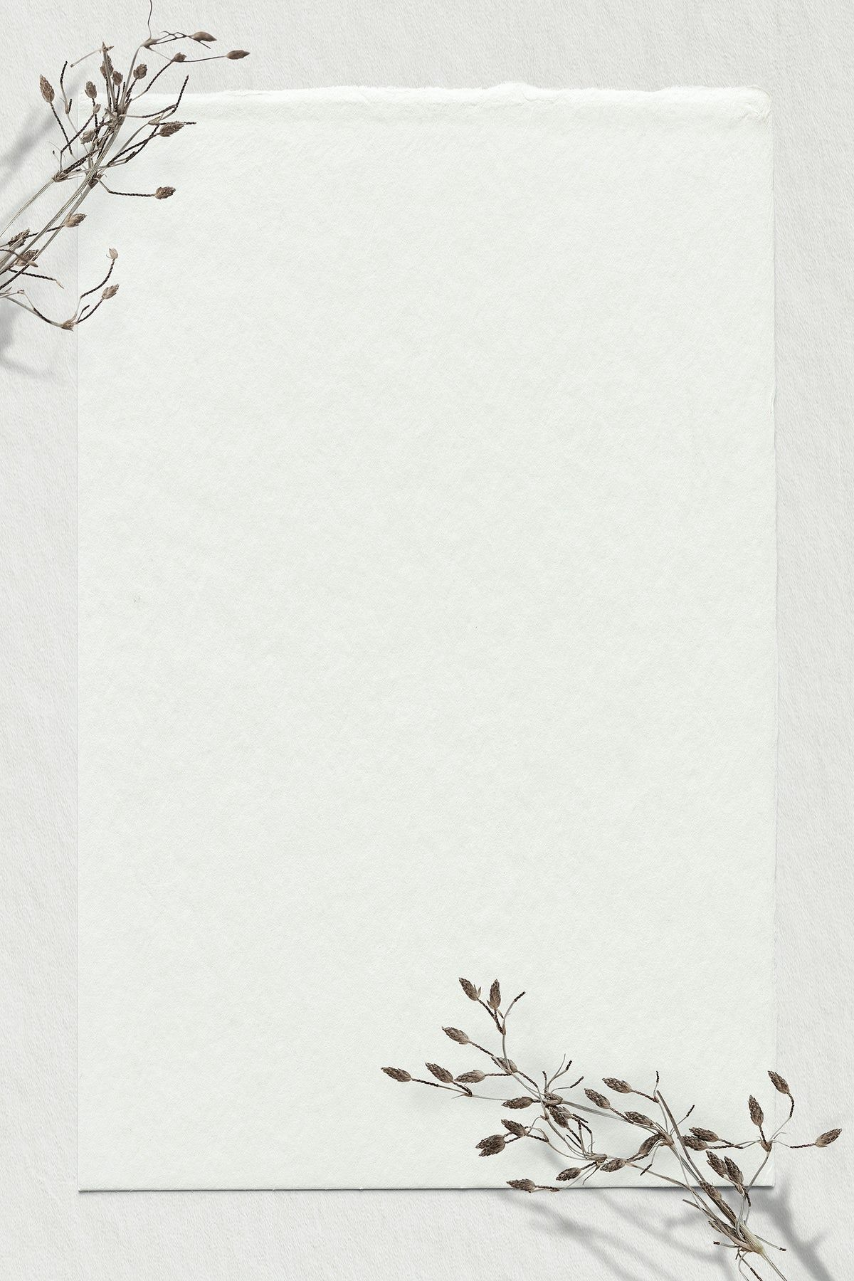 Download premium psd / image of Dry branch psd off white background text space by Nunny about background flower, paper flower, dried flower, flower frame, and dry flower 2466599