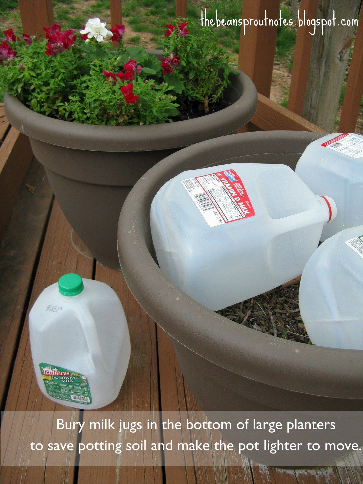 When planting in large planter pot, place plastic milk jugs inside the  bottom of your pot before filling with soil. You'll save money on soil!
