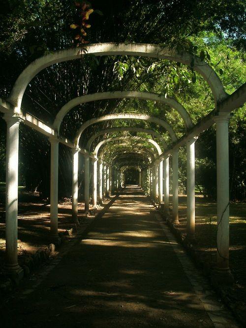 Jardim Botânico do Rio de Janeiro - (by Lucas Bandoch)
