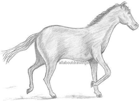 Horse · simple pencil horse drawings