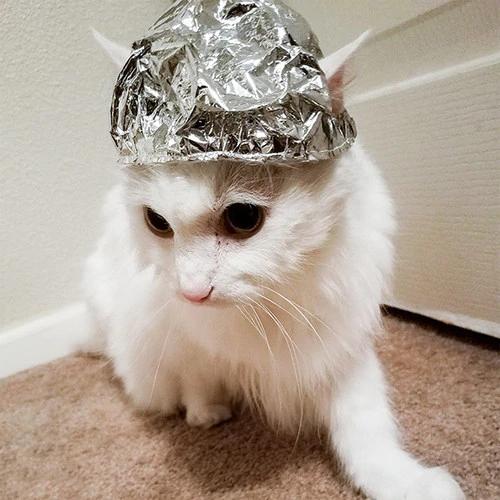 Tin Foil Cat Hat Crazy Cats Tin Foil Hat Cat Hat