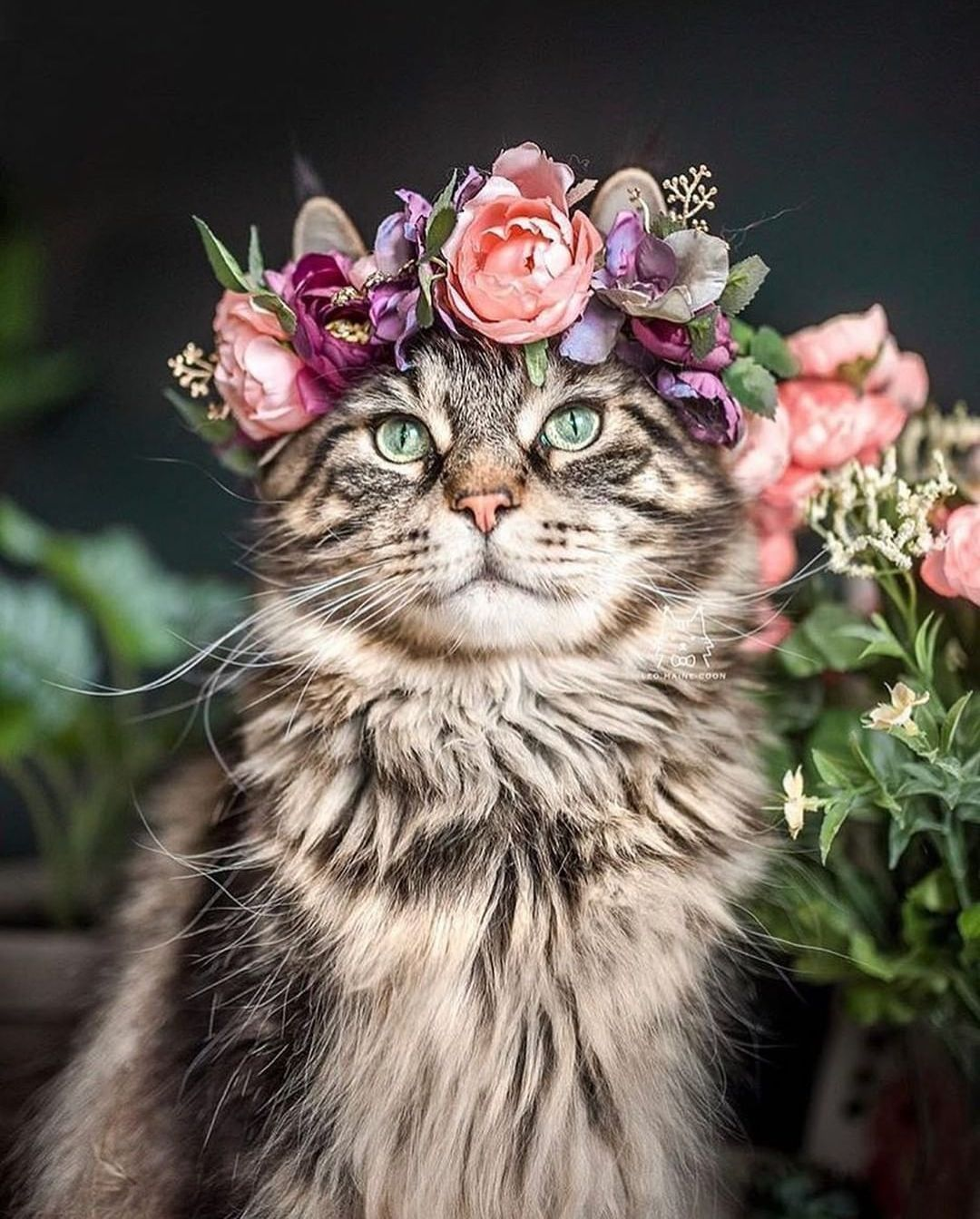 Another instance of #floralFriday done right. 🐱: @leo.mainecoon Flower crown: Yarely (@freyasfloralco). We first featured this on our Instagram account, My Modern Met en Español (@mymodernmetes). Follow us there for even more photography! 👈 #photography #photographylovers #photographysouls #animalphotography #animalphotographyofinstagram #flowerart #flowerartist #flowerartgraphy #flowercrowns
