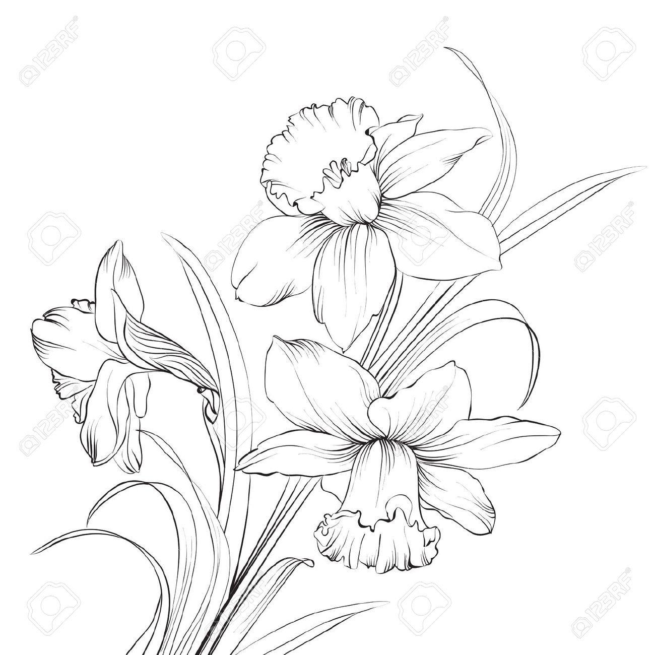 Narzissenblume oder narzissen isoliert auf weiß abbildung déssins