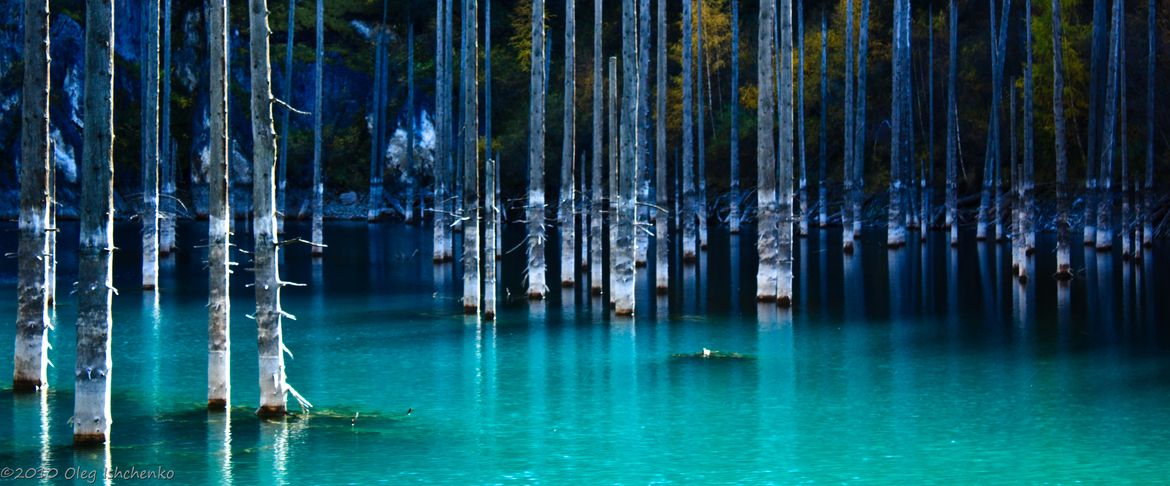 imagine white tree trunks sticking up out of blue or black water or vice versa