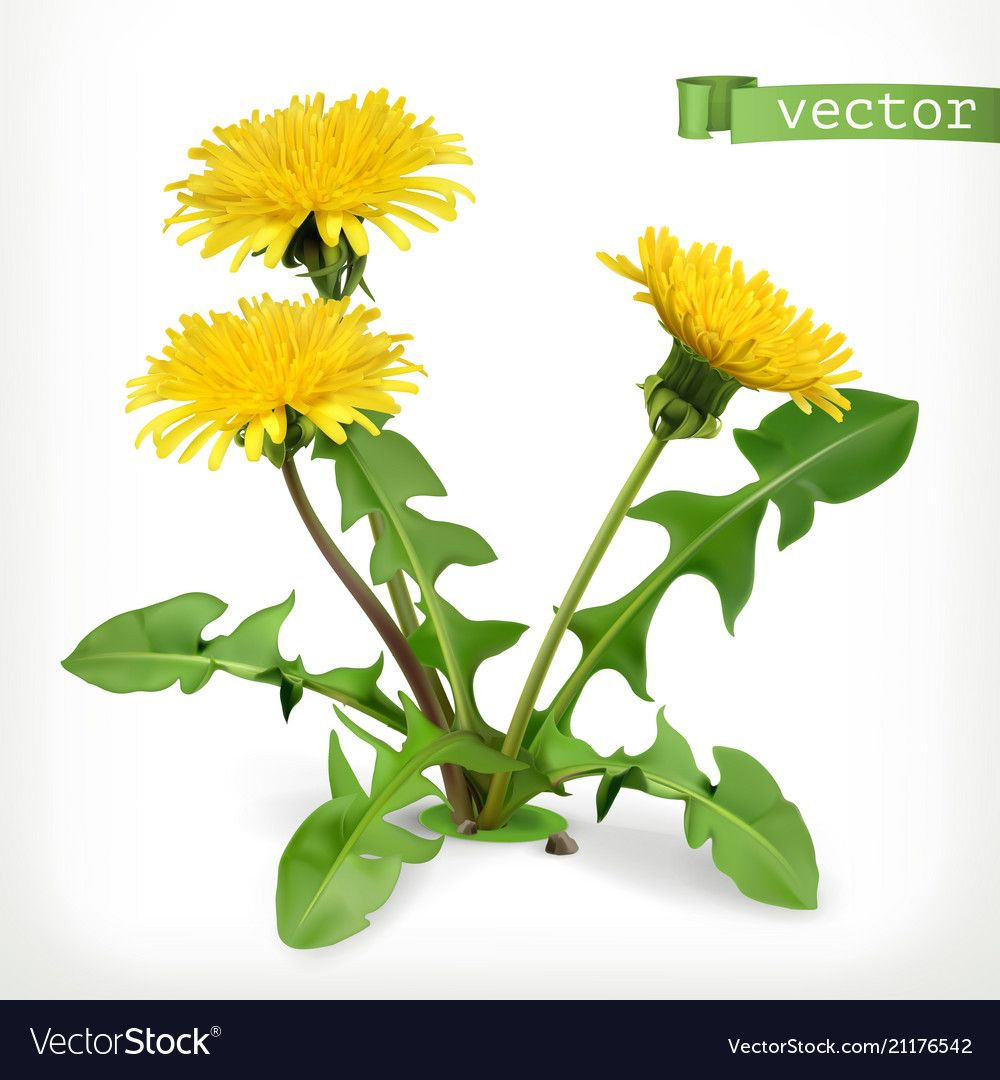 Dandelion Flowers 3d Icon Vector Image On Vectorstock In 2020 Dandelion Flower Flowers Flower Painting