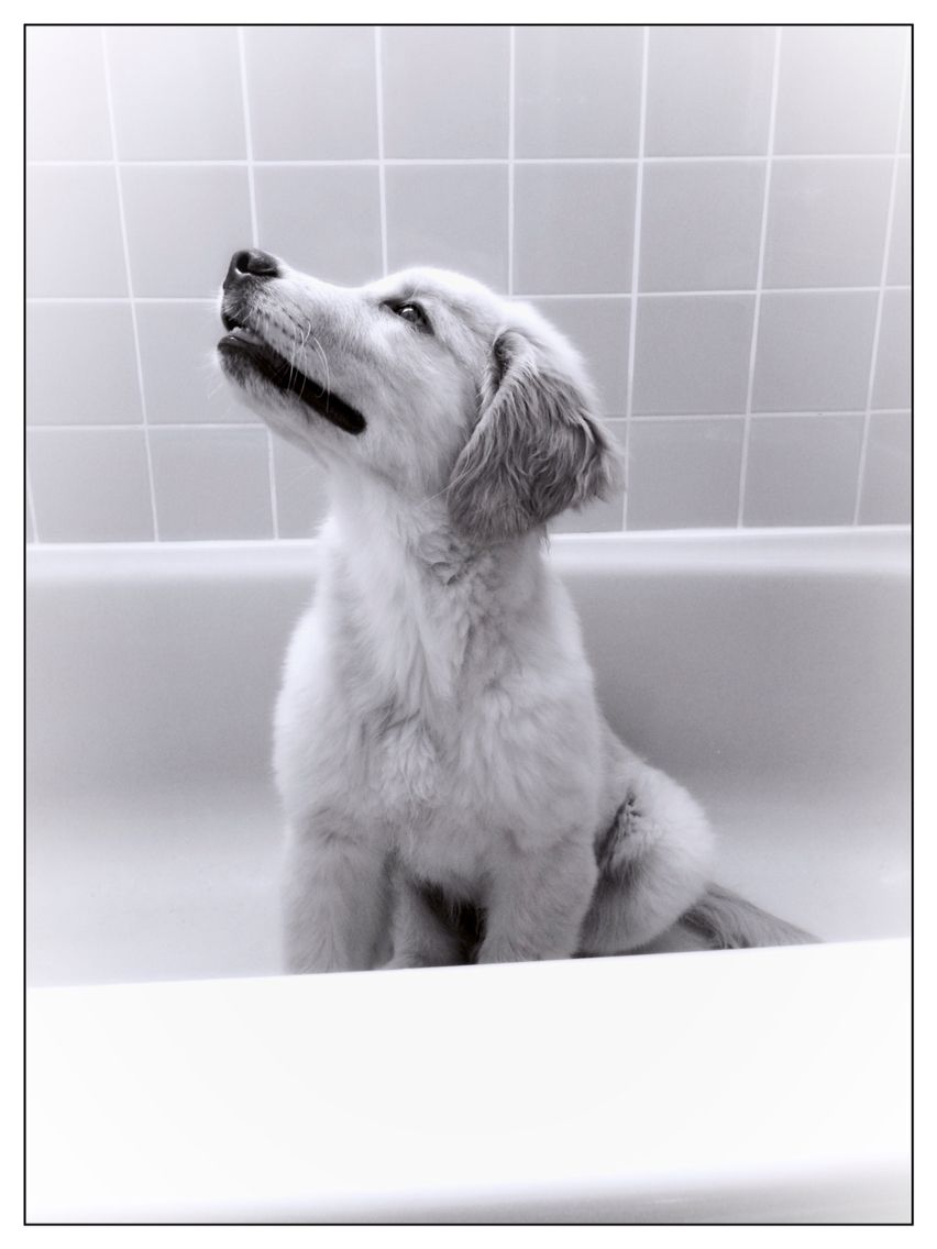Loves The Shower Waiting For The Water Photo Credit