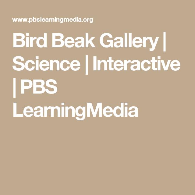 Bird Beak Gallery | Science | Interactive | PBS LearningMedia