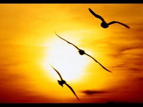 Meditación Guiada Para Comenzar El Día Programar El Día Perfecto Youtube Gaviotas Volando Aves Volando Meditacion