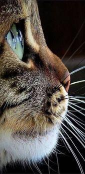 Photo of Beste Katzen Hintergrund iPhone Ideen # Katzen Tier Hintergrund iPhone Beste Katzen Backg …