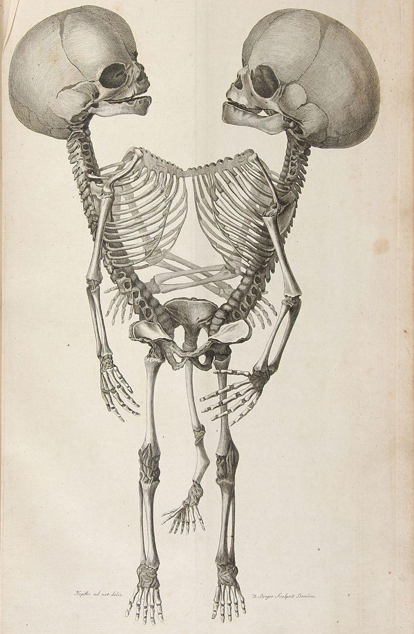 Scientific Illustration | Anatomy | Pinterest | Der mensch