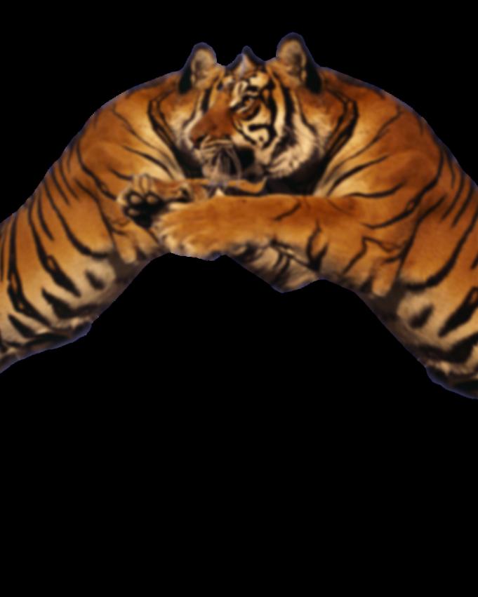 Visual Tiger Face Mask Editing Tiger Face Tiger Face Mask Face Mask