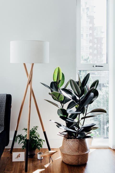 27 Interior Design Plants Inside House Pictures #plantsindoor