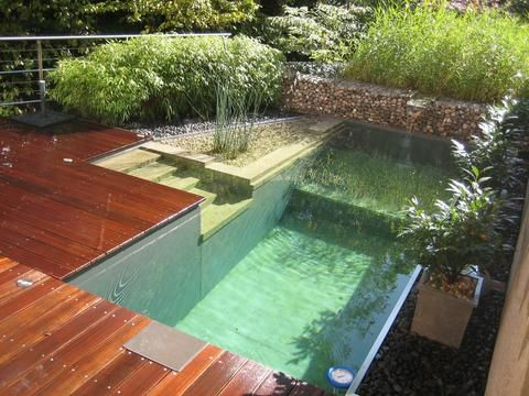 Natural Pool with Wood Decking | Natural Swimming Pools