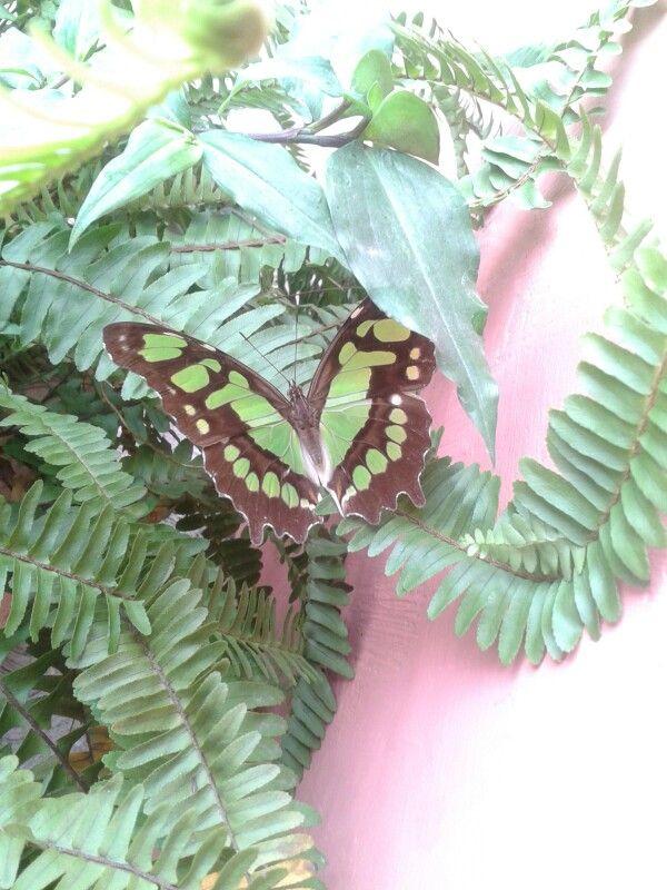Mariposa en Tuxpan, Veracruz