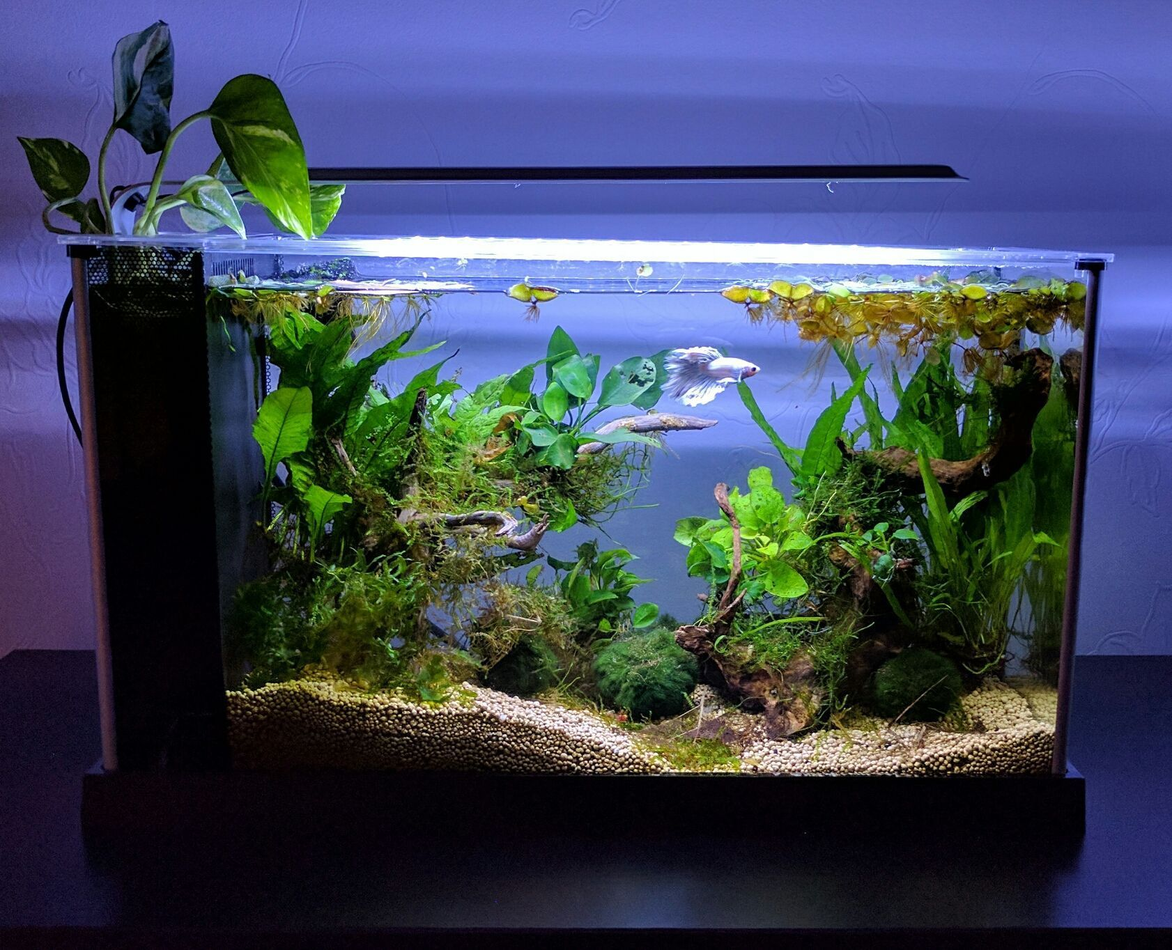 21 Best Aquascaping Design Ideas To Decor Your Aquarium Tips Inside Homelovers Planted Betta Tank Fish Tank Decorations Tropical Fish Tanks