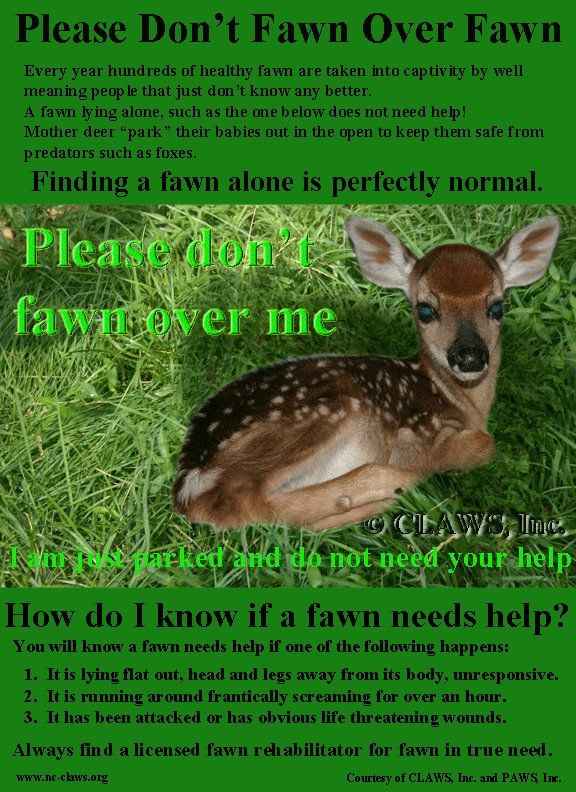 Please Don T Fawn Over Me Wildlife Rehabilitation Animals Matter Pets First