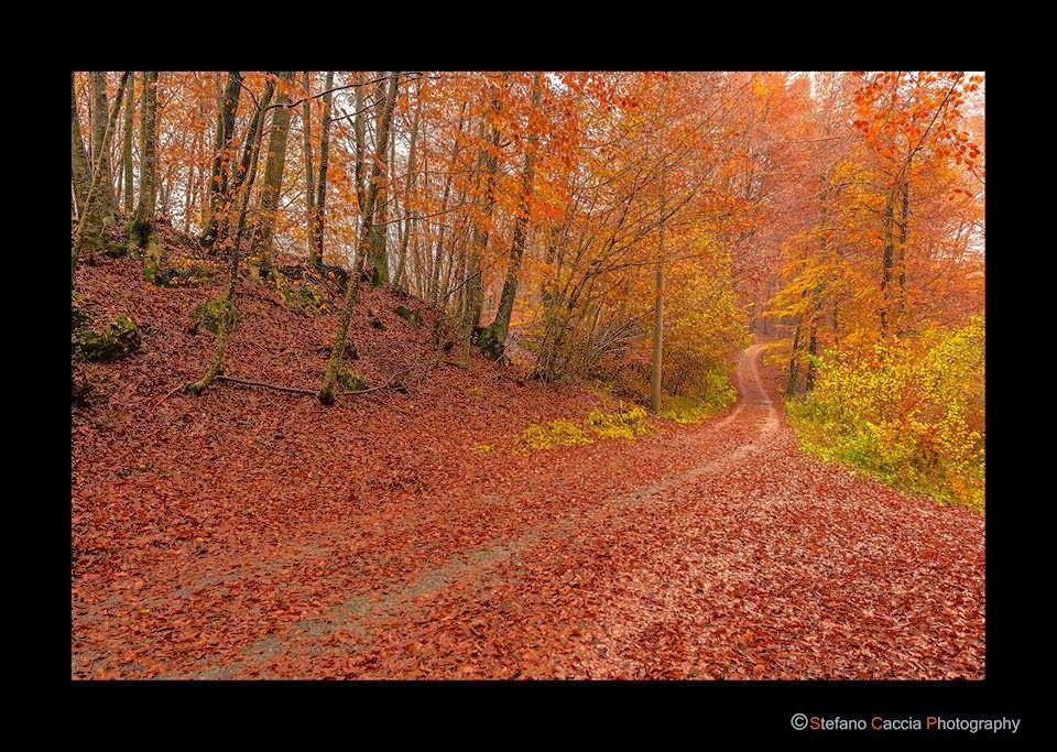 ART'é FvG blog: Foliage.Tra Priuso ed Ampezzo