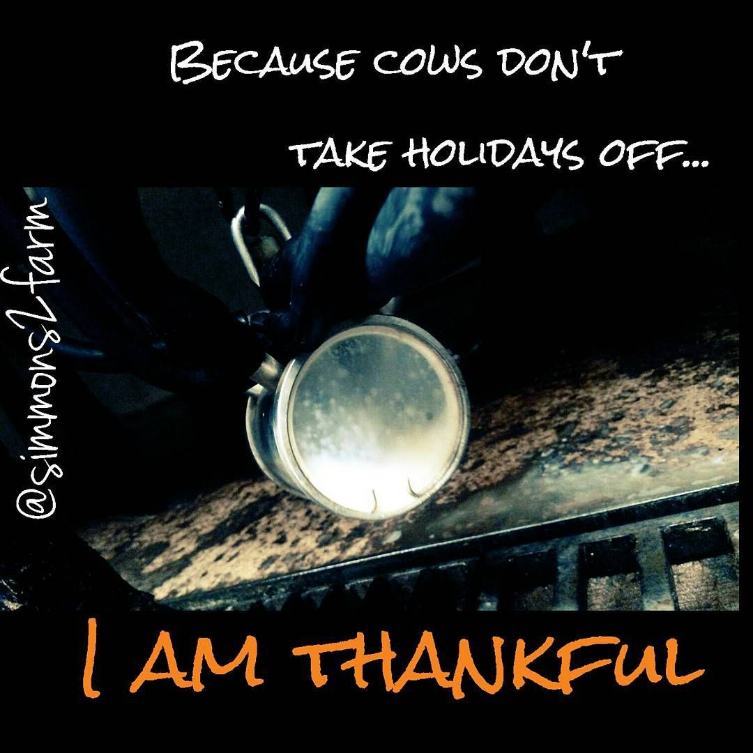 """""""Thankful not only because I have the most awesome job & lifestyle ever but because I am able bodied to keep up with it! #milkingcows365 #evenonholidays…"""""""