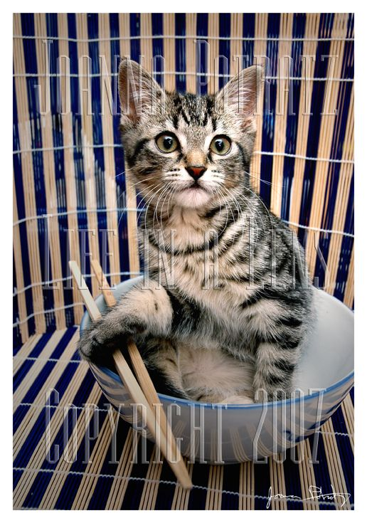So Cute I Could Eat You Up By Sweetmysterium Cute Animals Bobtail Cat Crazy Cats