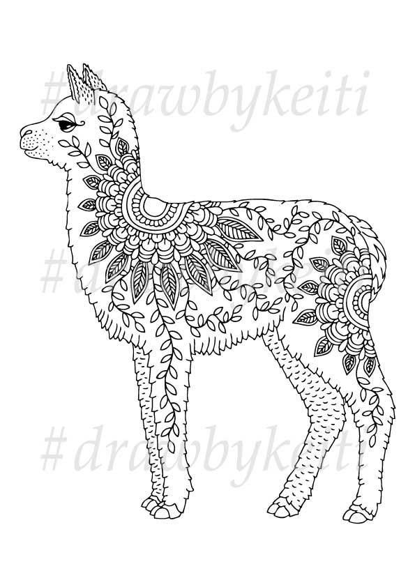 baby alpaca. vector illustration for coloring page