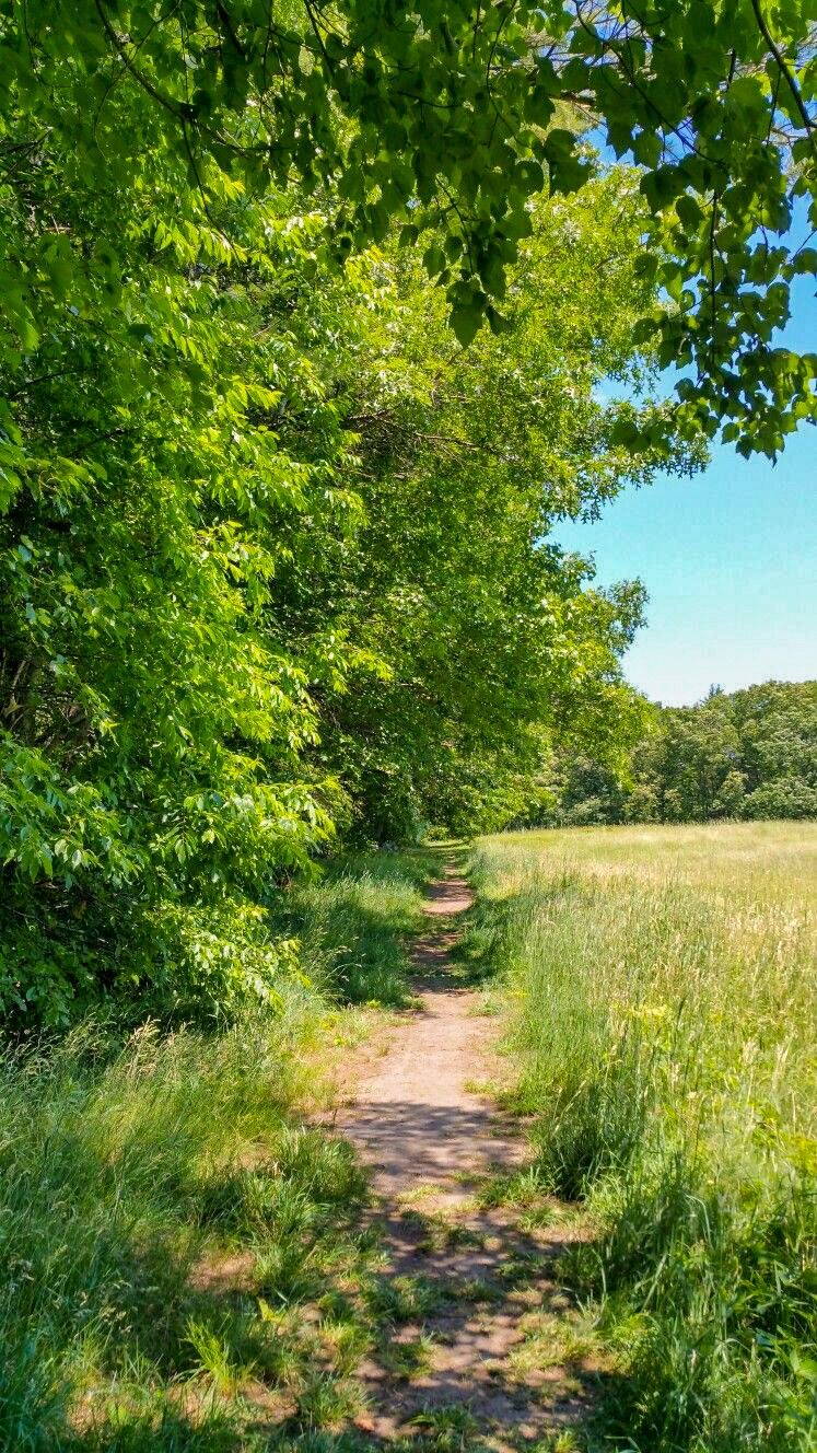 Summer Field Path Photographer And Location Unknown Cr Landscape Photography Beautiful Nature Landscape