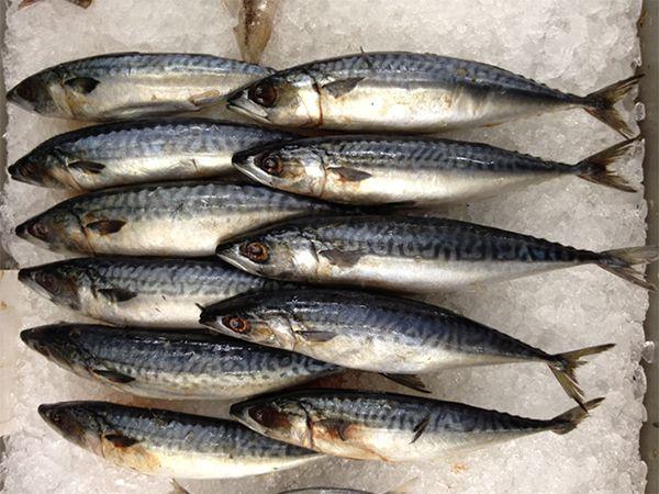 Easy Baked Mackerel Recipe   Baked Saba Fish Recipe