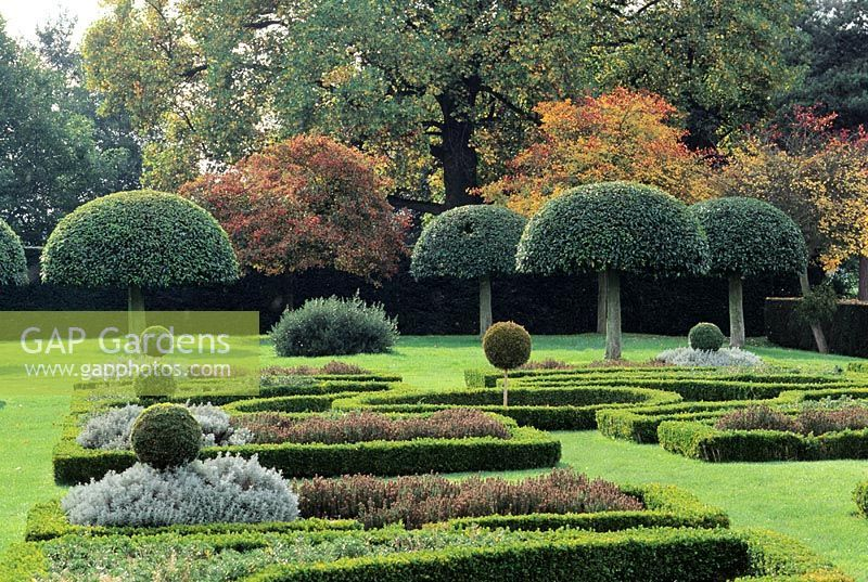 Image Result For Umbrella Shaped Trees Boxwood Topiary