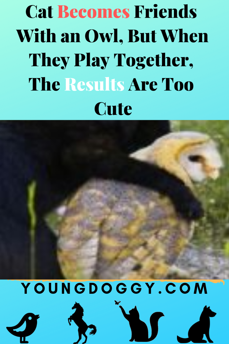 Cat Becomes Friends With An Owl But When They Play Together The Results Are Too Cute Cats And Kittens Cats Funny Cats