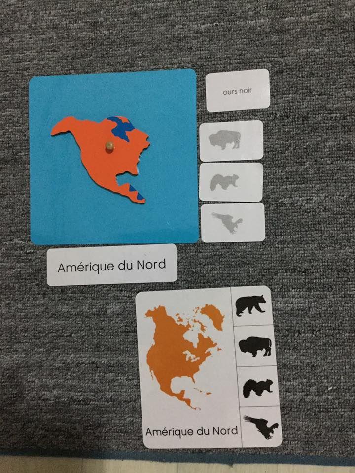 Boite Des Animaux Par Continent Geographie Animaux Du Monde Et