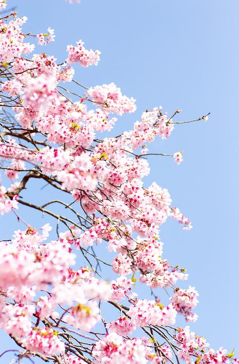 Http Wallflooweerr Tumblr Com Flower Background Wallpaper Spring Wallpaper Flower Phone Wallpaper