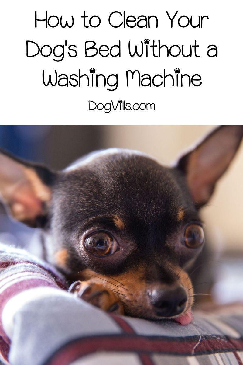 How To Clean A Dog Bed Without A Washing Machine Dog Bed Dogs