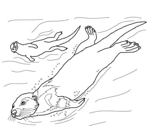 Sea Otter coloring page from Otters category. Select from
