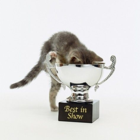 Kitten Climbing into Trophy' Photographic Print - Pat Doyle |  AllPosters.com | Cats and kittens, Kitten, Cat photo