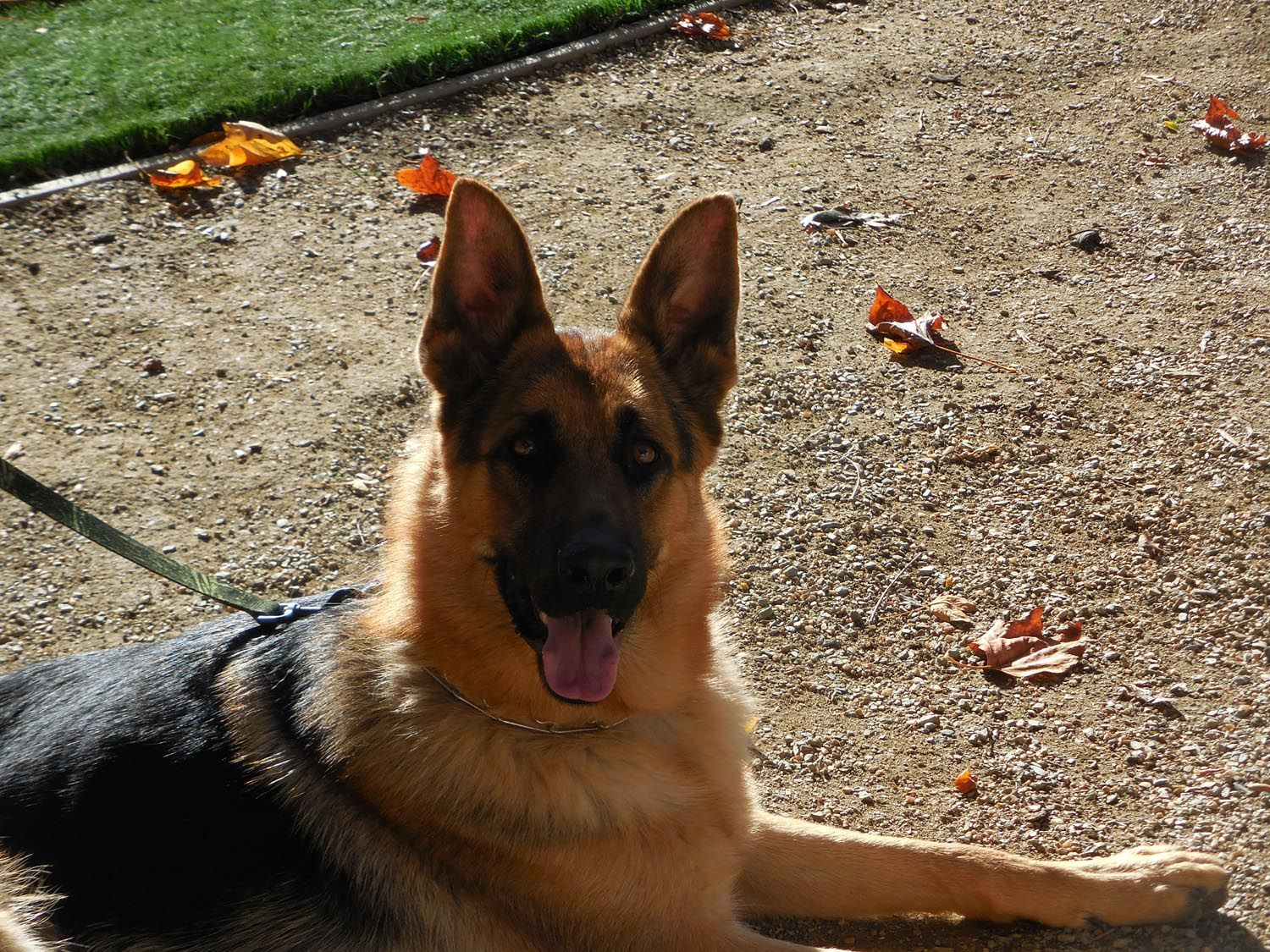 Welcome To Very Handsome 2 Year Old Rookie From Sacramento