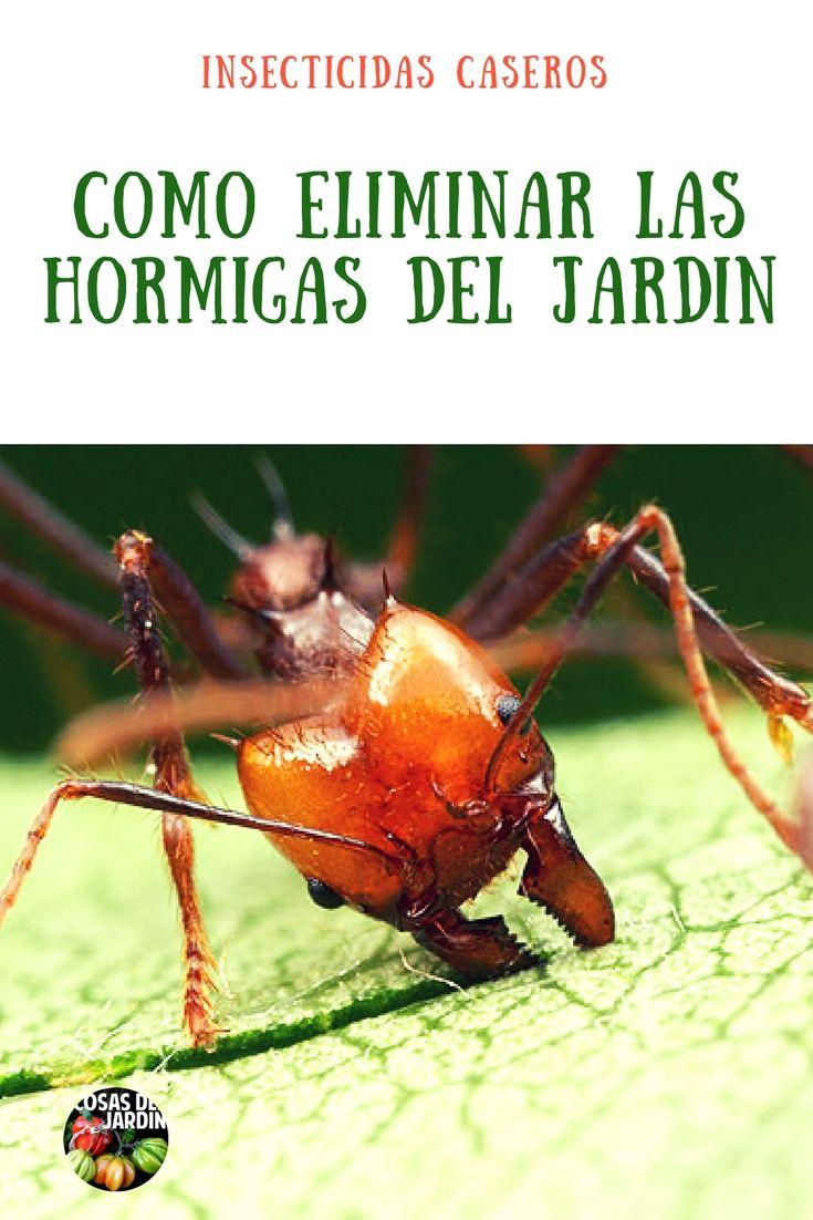 Como eliminar las hormigas del huerto novedosa receta - Como acabar con las hormigas en el jardin ...