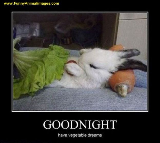 funny bunny rabbits | FunnyAnimalimages.com | Page 8