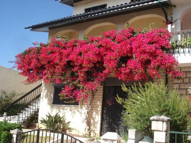 Welche Balkonpflanzen für pralle Sonne? 10 Ideen für