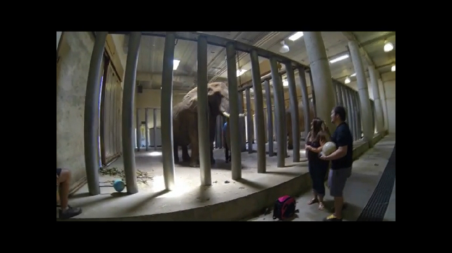 What Happens When a Man, Woman, Elephant and a Bowling Ball Are in the Same Room?... http://bit.ly/18P1pCj