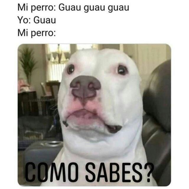 Pin De This2909 En Memes V 4 Memes De Perros Chistosos Memes Divertidos Sobre Perros Memes Buenisimos