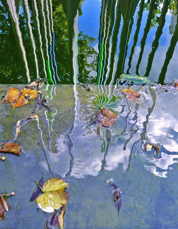Fotografía Leaves por Gernot Schwarz en 500px