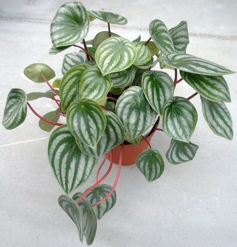 Easy care houseplants houseplant bright lights and plants for Easy care garden shrubs