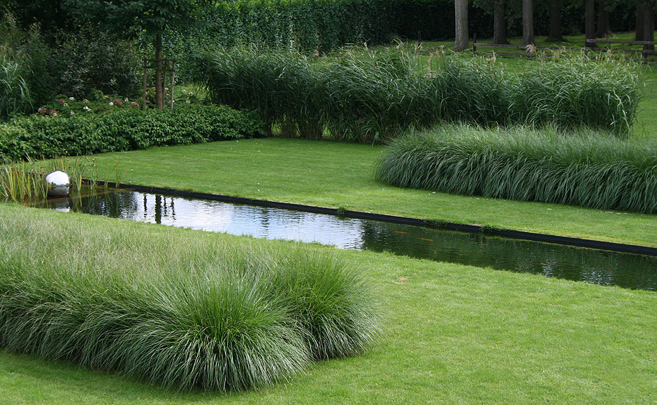 Garden Design Grass two types of grasses, a pennisetum and a miscanthus, are used