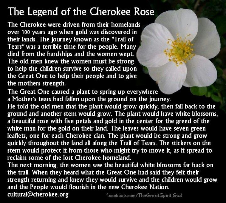 Cherokee Indian Quotes Mesmerizing Cherokee Tears  People ~ American Indian  Pinterest  Cherokee